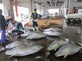 海産物・水産加工品の一例│室戸の田舎暮らし移住
