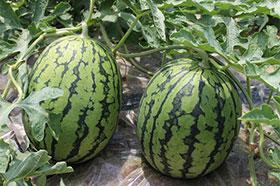 野菜・果物の一例│室戸の田舎暮らし移住