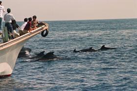 クジラに会える「ホエールウォッチング」│室戸の田舎暮らし移住