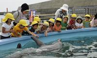イルカと触れ合う