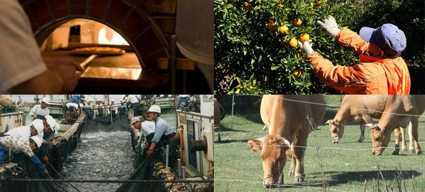 田舎暮らし・室戸でお仕事│室戸の田舎暮らし移住