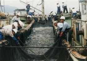 漁業、水産業、水産加工業│室戸の田舎暮らし移住